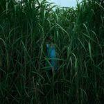 Crítica de 'En la hierba alta' (2019) Estirando el espacio y el tiempo